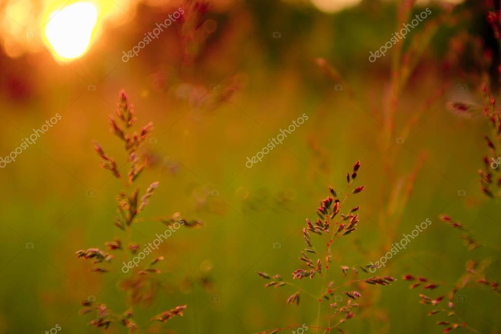Close-up Season grass sunset sun summer landscape