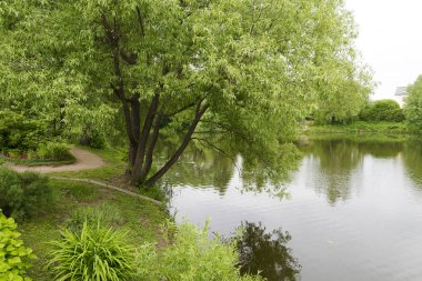 A tree near the lake on a summer day.