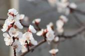 jarní kvetení květin na stromě, bílé květy