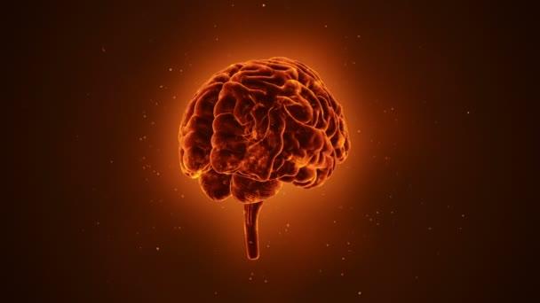 animace rotace lidského mozku na oranžovém pozadí, konceptu vědy a sociálních technologií. Animace bezešvé smyčky.