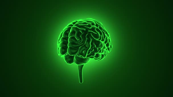 animation of rotation human brain on green background, science and social technology concept. Animation of seamless loop.