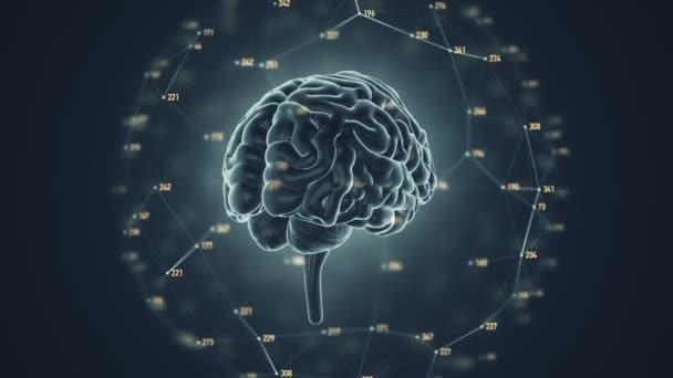 animációja forgás emberi agy háttér, a tudomány és a társadalmi technológia koncepció. Zökkenőmentes hurkok animációja.