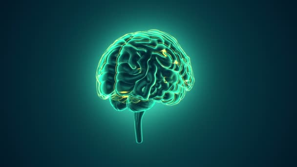 animation of rotation human brain with neuronal impulses inside on green background, science and social technology concept. Animation of seamless loop.