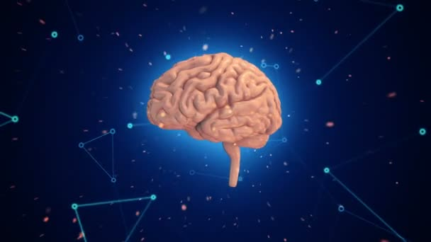 Animation of rotation pink human brain with flying data around on blue background. Animation of seamless loop