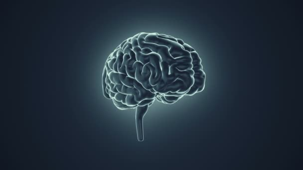 animation of rotation human brain on grey background, science and social technology concept. Animation of seamless loop.