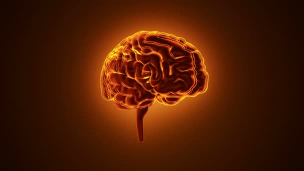 animation of rotation human brain with neuronal impulses inside on red background, science and social technology concept. Animation of seamless loop.
