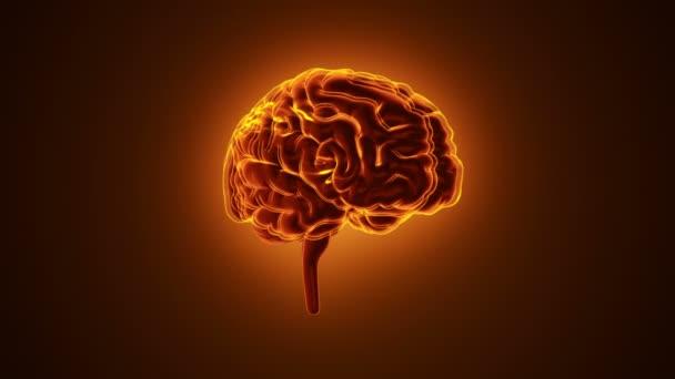 animace rotace lidského mozku s neuronovými impulsy uvnitř na červeném pozadí, vědě a konceptu sociálních technologií. Animace bezešvé smyčky.