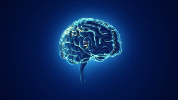 animation of rotation human brain with neuronal impulses inside on blue background, science and social technology concept. Animation of seamless loop.