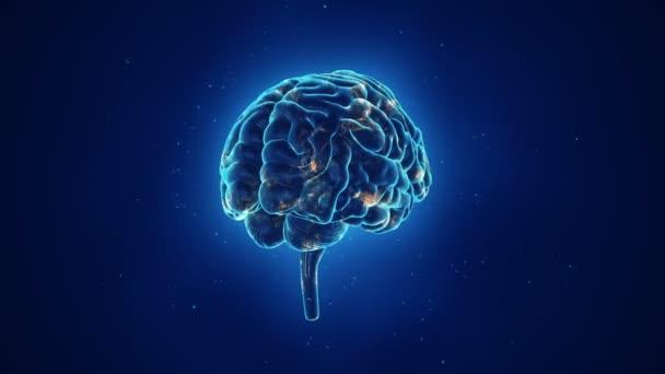 animace rotace lidského mozku na modrém pozadí, koncepce vědy a sociálních technologií. Animace bezešvé smyčky.
