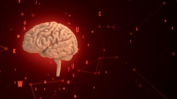 Animace rotačního růžového lidského mozku s letícími daty na červeném pozadí. Animace bezešvé smyčky