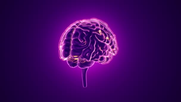 animation of rotation human brain with neuronal impulses inside on purple background, science and social technology concept. Animation of seamless loop.