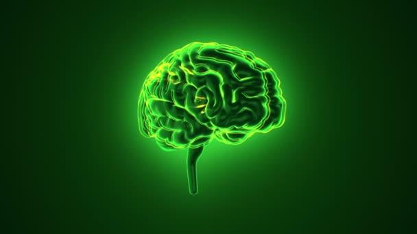 Animace rotace zeleného lidského mozku s letícími daty na šedém pozadí. Animace bezešvé smyčky