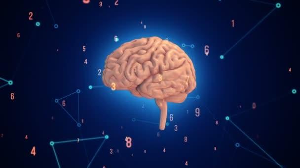 Animace rotačního růžového lidského mozku s letícími daty na modrém pozadí. Animace bezešvé smyčky