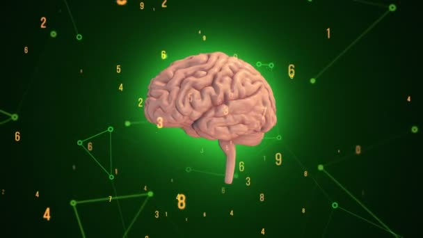 Animation of rotation pink human brain with flying data around on green background. Animation of seamless loop