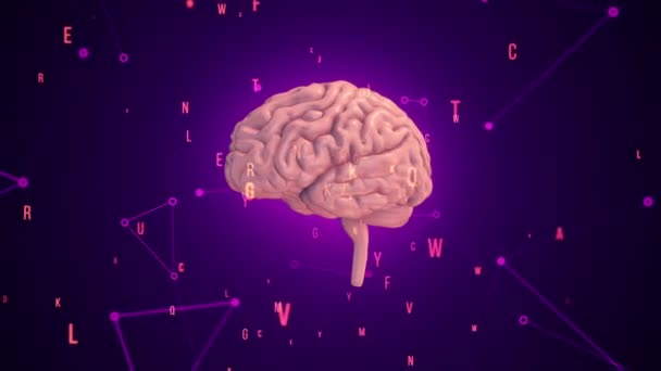 Animation of rotation pink human brain with flying data around on purple background. Animation of seamless loop