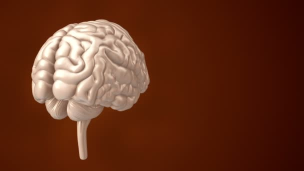 animation of rotation human brain on red background, science and social technology concept. Animation of seamless loop.