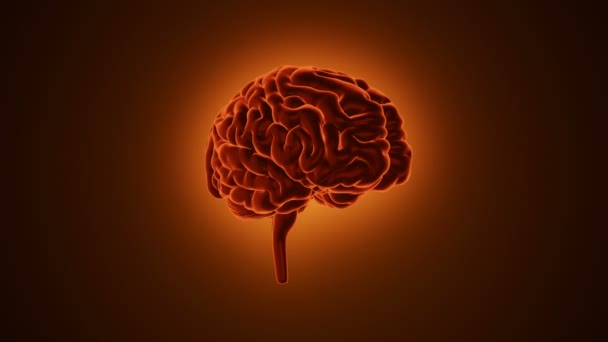 animation of rotation human brain on orange background, science and social technology concept. Animation of seamless loop.