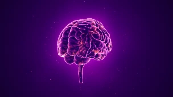 animation of rotation human brain on purple background, science and social technology concept. Animation of seamless loop.