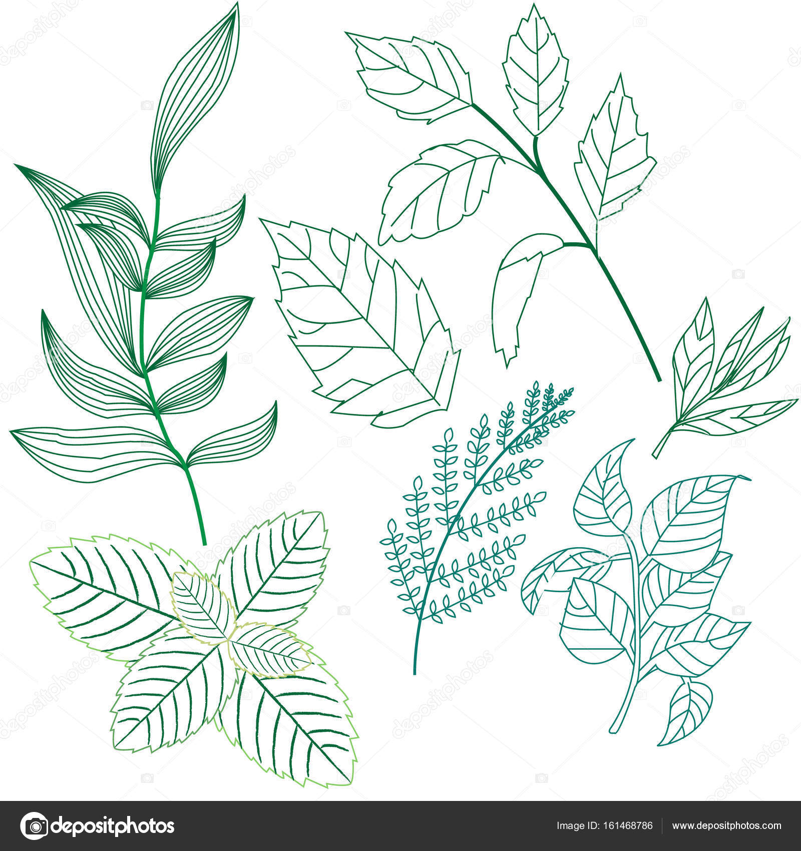 Set the leaves and twigs of various plants, a very good illustra ...