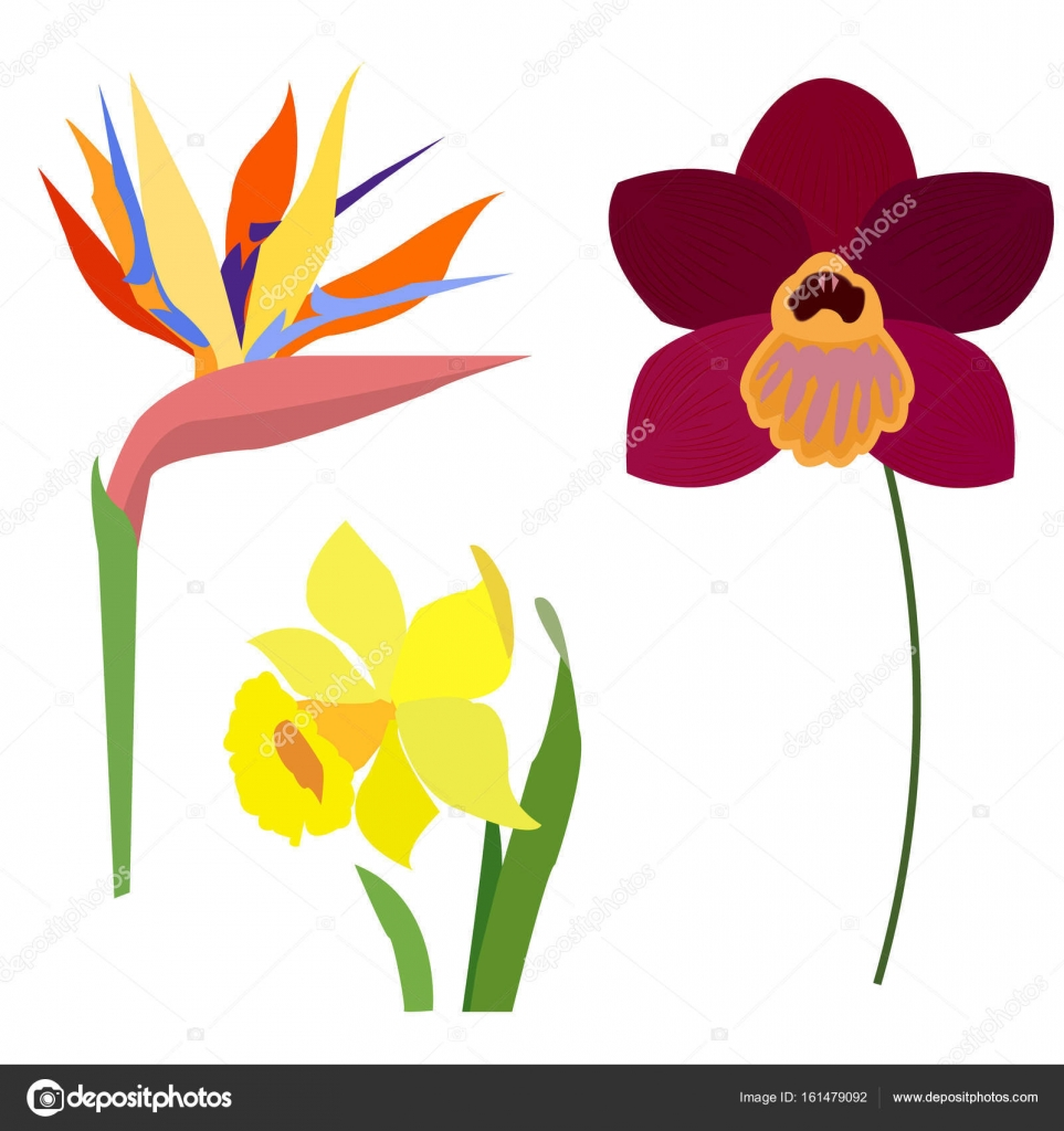 Green Yellow Red Flower Logo Awesome Graphic Library