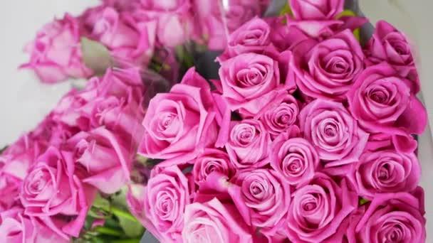 Růžová růže květinová detailní záběr. Pohyblivý makro záběr růžových růží. Romantické a růžové pozadí.