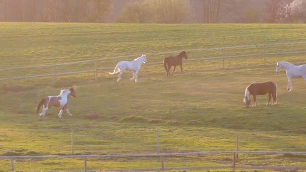 běžící koně na výběhu nebo louce