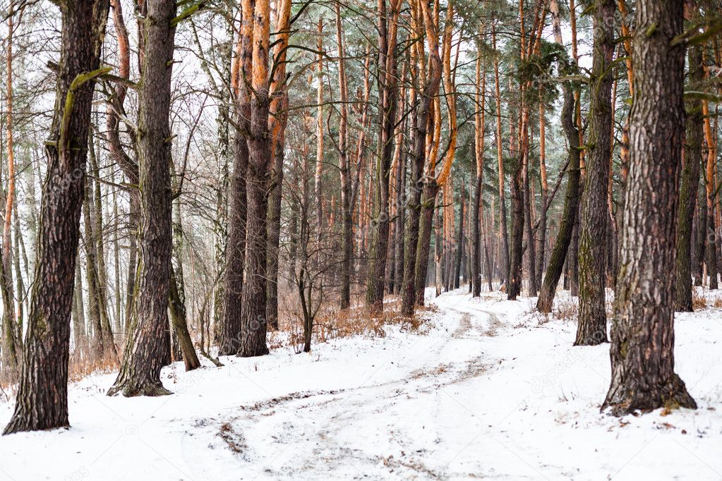Dirt road in the winter coniferous forest in the cloudy day.