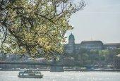Fényképek Virágzó fa-Budapest