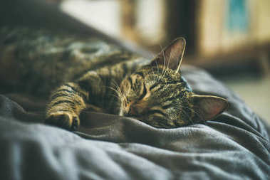 Cute grey cat sleeping