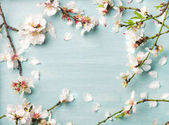 Fotografie Spring floral background, texture and wallpaper. White almond blossom flowers over light blue background