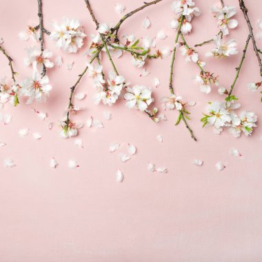 Spring floral background, texture, wallpaper. White almond blossom flowers and petals over pink background