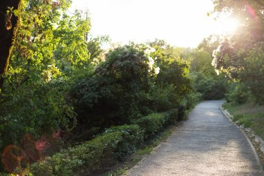 Beautiful green nature in the city during the day