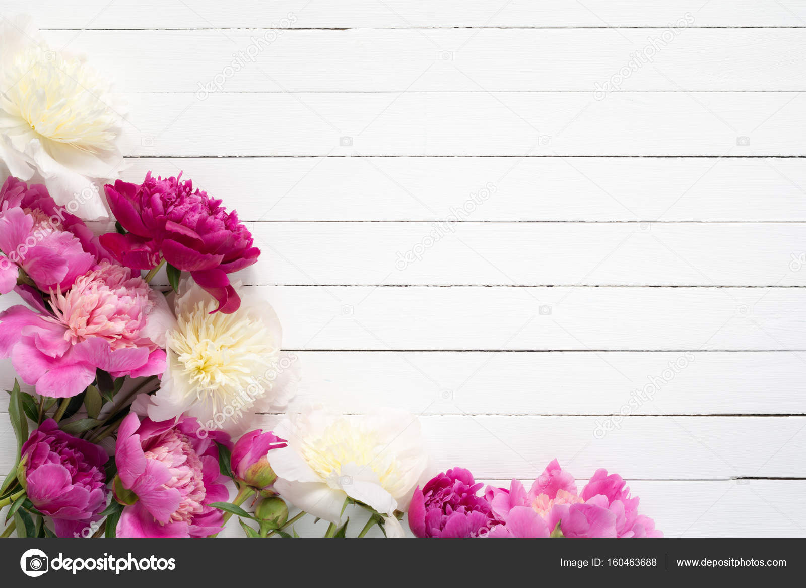Peonies Peonies Floral Frame On White Wooden Background Stock