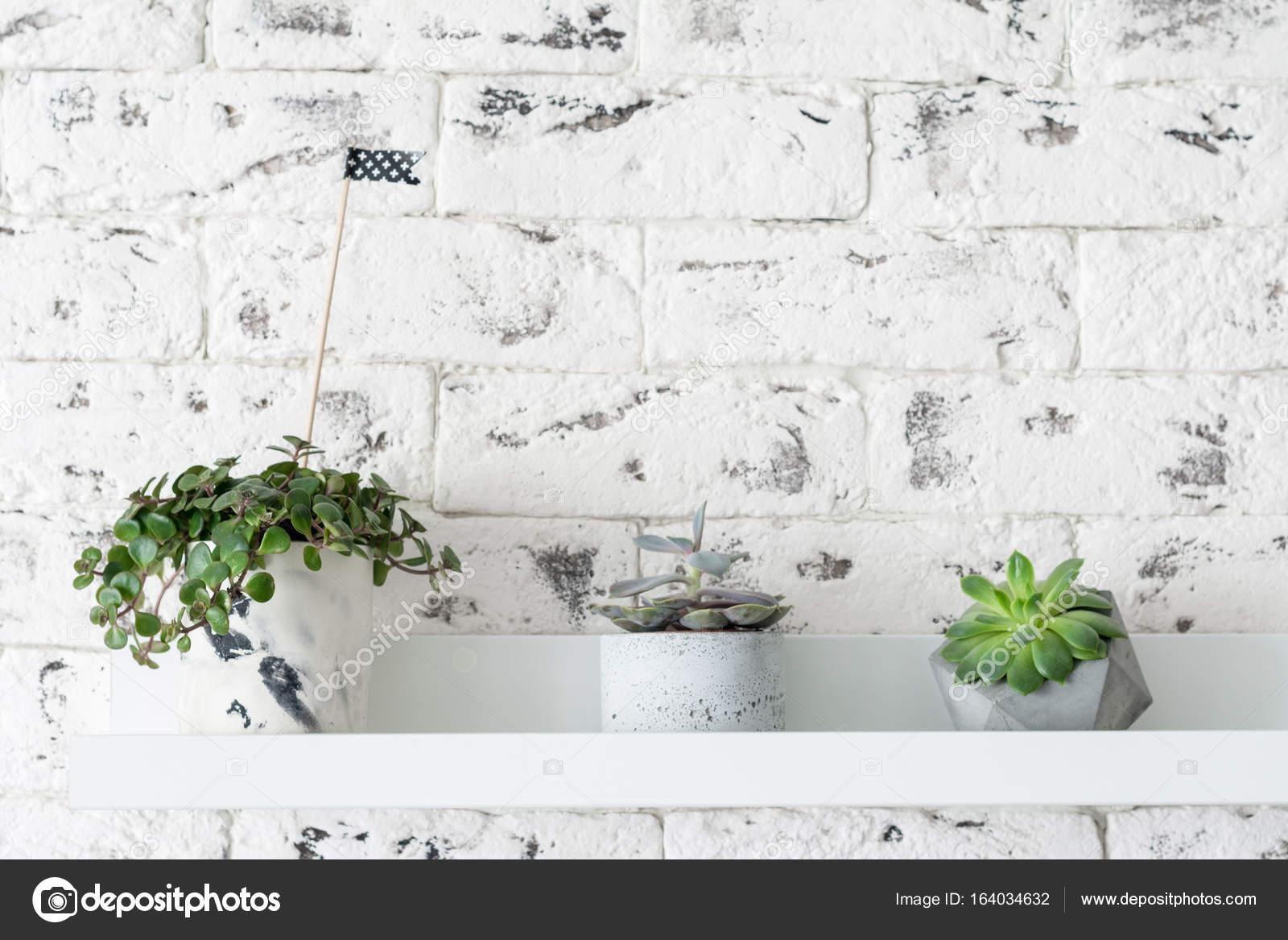 Piante grasse sopra il muro di mattoni bianco u foto stock