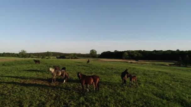 Vzdušný pohled na stádo čistokrevných koní a hříbat pasoucích se v zelené trávě. Skupina různých krásných chovných koní. Venkovský svět.