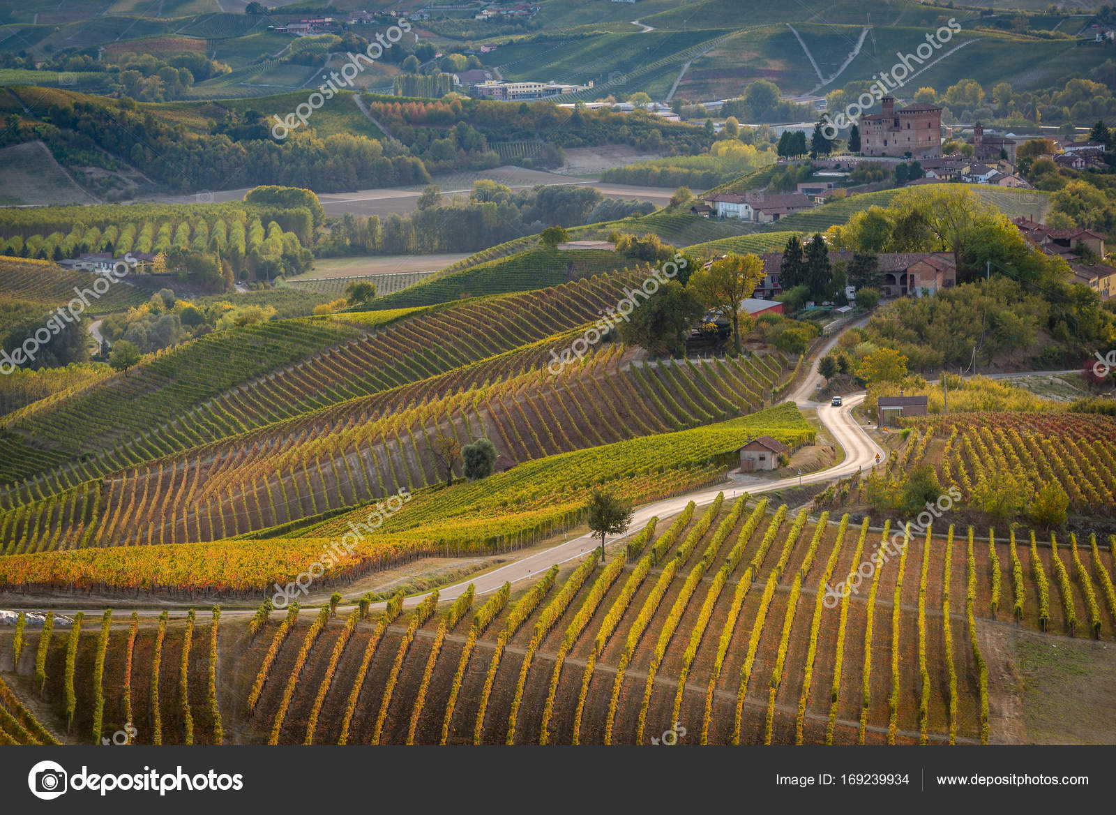 Vineyards in langhe region of northern italy in autumn with