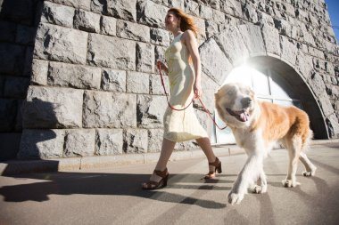 A beautiful woman is walking in a city on a leash large dog.