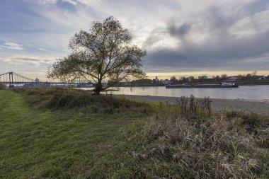 Krefeld-Uerdingen - View to vessel passing at River Rhine,  North Rhine Westphalia, Germany, 23.11.2019