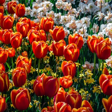 Colorful spring flowers in a garden, beautiful natural background