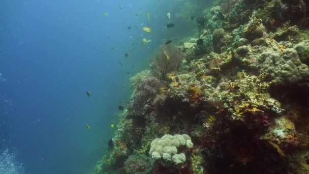 Korallenriff und tropische Fische