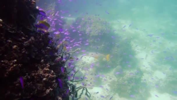 Korallenriff mit Fischen unter Wasser