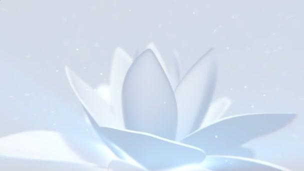 pozadí bílý květ