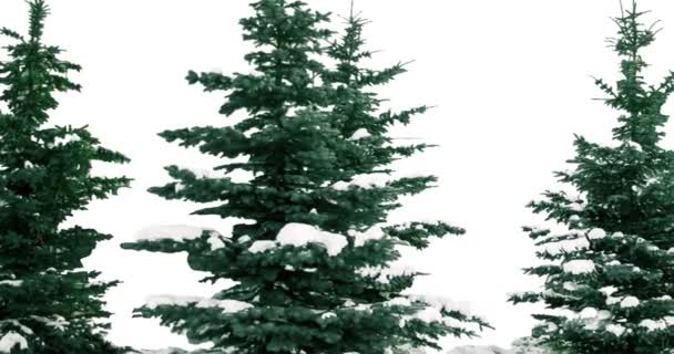 New year fir tree.