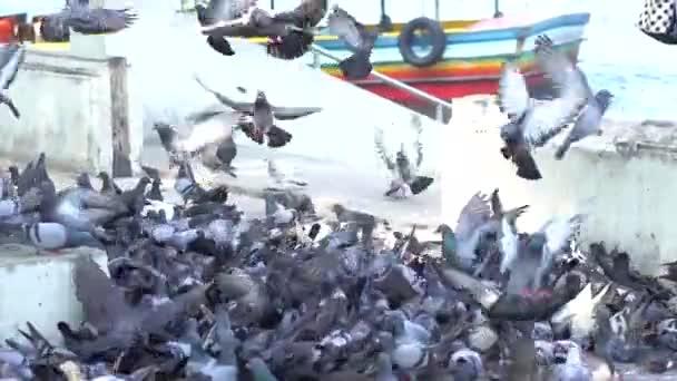Many doves walk on the ground, slow motion shot