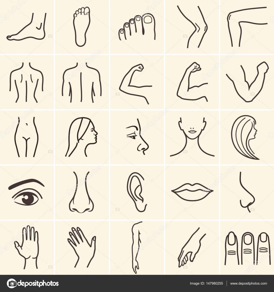 iconos de cuerpo humano — Vector de stock © 3xy #147980255