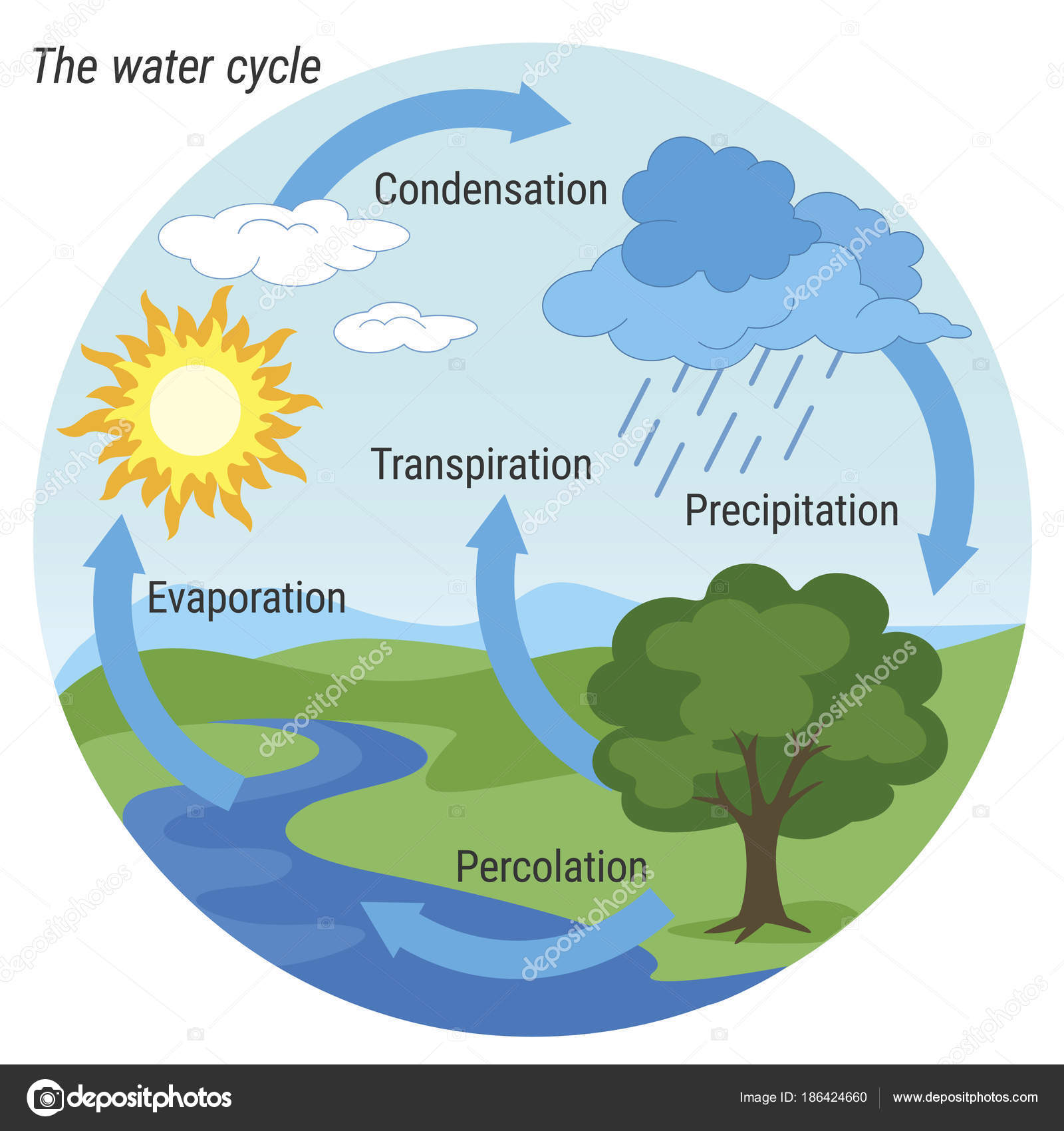 Water Cycle Colour Stock Vector C 3xy 186424660