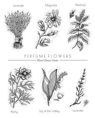 lavender, patchouli, peony, magnolia
