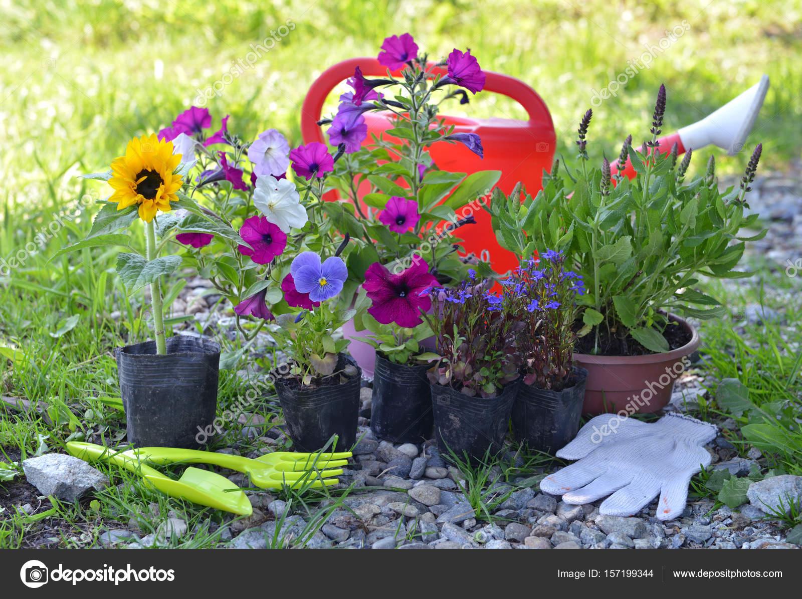jardin nature morte avec outils arrosoir et fleurs d t. Black Bedroom Furniture Sets. Home Design Ideas