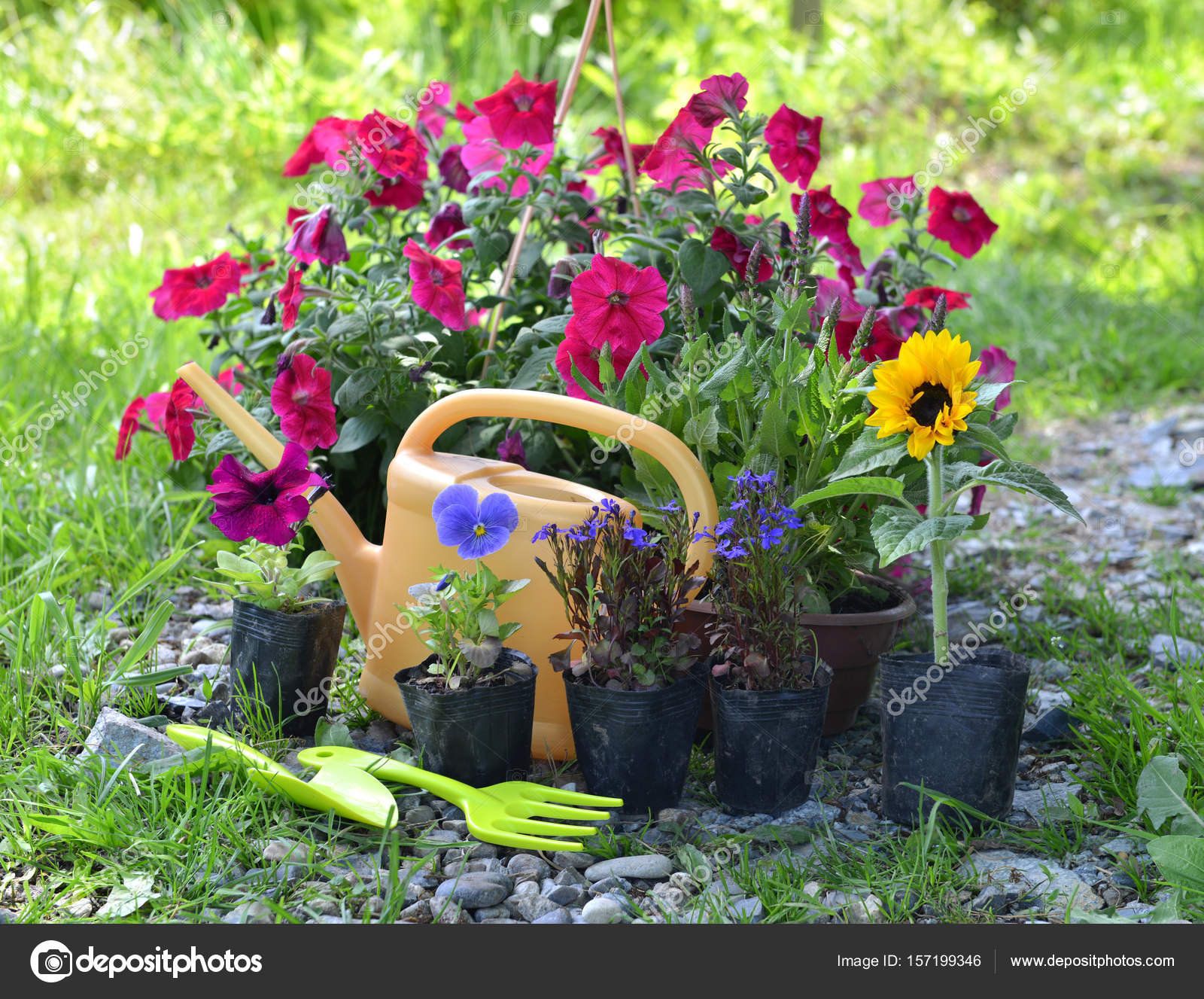 Beautiful Garden Still Life With Petunia And Summer Flowers In