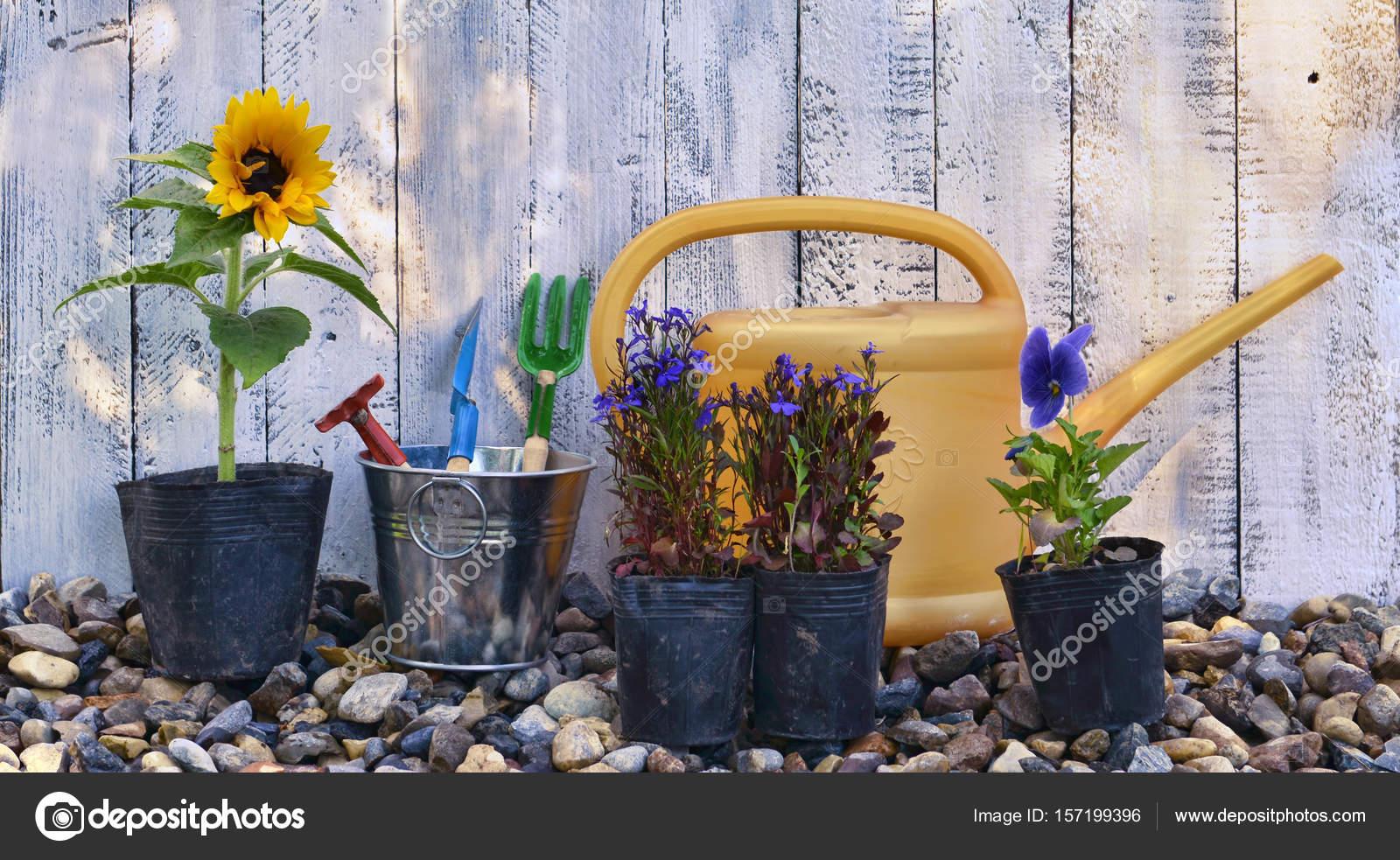 stilleben mit sommerblumen pflanzen töpfe und gartenwerkzeuge gegen